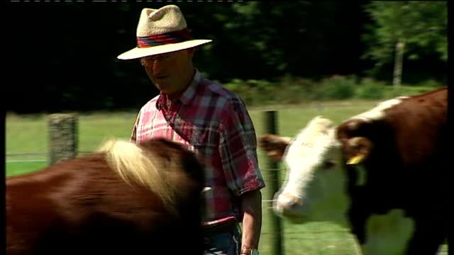 foot and mouth disease outbreak in surrey confirmed; surrey: nigel metson stands amongst his herefordshire cattle in field nigel metson interview sot - herefordshire bildbanksvideor och videomaterial från bakom kulisserna