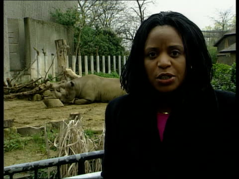 tourist industry leaders visit england london ms lion sitting in london zoo bv man and girl at lion enclosure pan lion i/c ohajah along thru lobby... - maul und klauenseuche stock-videos und b-roll-filmmaterial