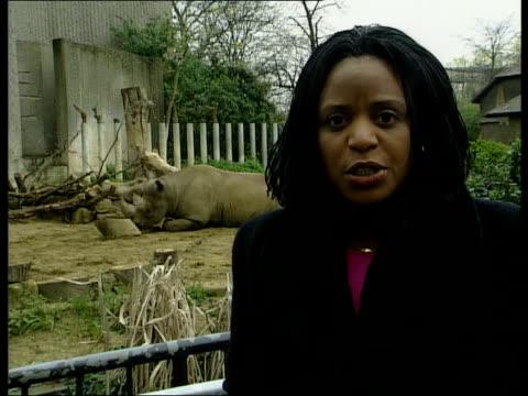 vídeos de stock, filmes e b-roll de tourist industry leaders visit england london ms lion sitting in london zoo bv man and girl at lion enclosure pan lion i/c ohajah along thru lobby... - parque regents