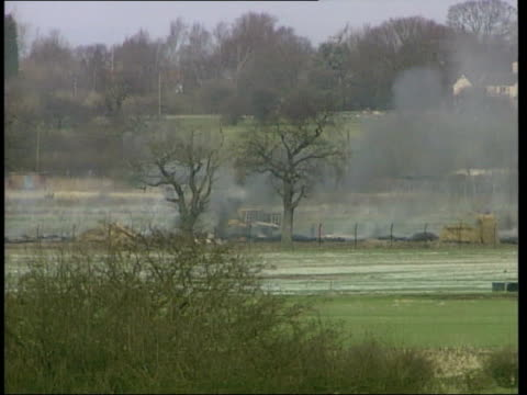 vídeos y material grabado en eventos de stock de more cases itn england staffordshire sheep grazing in field as funeral pyre burns in b/g lmss diggers at work at pyre northeast england int ms nick... - buckinghamshire