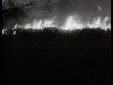foot and mouth outbreak; lib 1967 b/w ext line of cattle carcases being burnt during outbreak of foot & mouth disease huge bonfire of animal carcases... - animal mouth stock videos & royalty-free footage