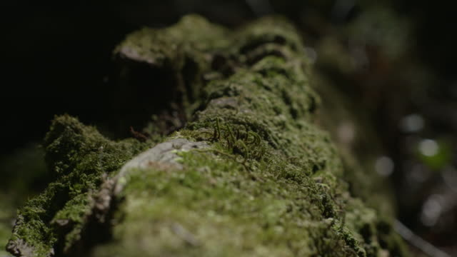 a foot moves over a moss-covered log in new south wales, australia. - log stock videos & royalty-free footage