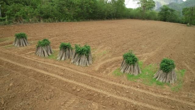 4K Footage Aerial shot farmers adjust the soil to grow cassava trees.