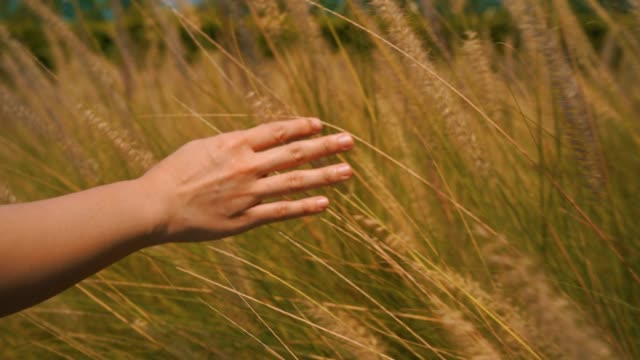 4k footage close up beautiful hand is touching the grass. - beauty in nature stock videos & royalty-free footage