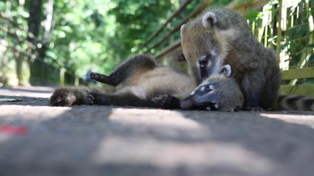 Footage from Argentina Iguazu Animals
