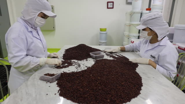 vídeos de stock, filmes e b-roll de footage from marou chocolate factory and cacao farm ho chi minh hồ chí minh vietnam on thursday february 21 2019 - indústria de comida e bebida