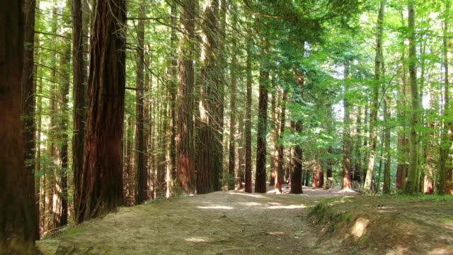 4k footage of a redwood forest - state park stock videos & royalty-free footage