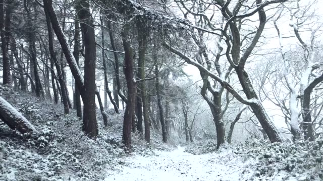 4k footage of a snow covered woodland - 30 seconds or greater stock videos & royalty-free footage
