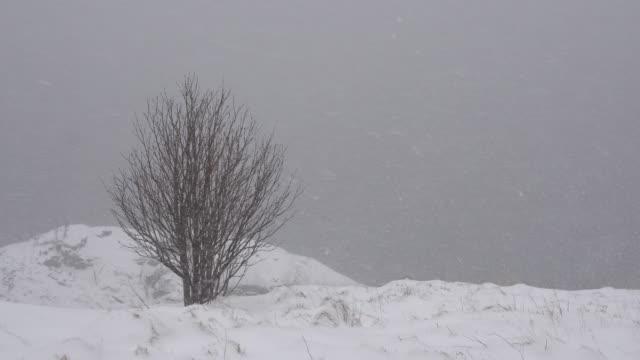 4 k 映像の美しい冬の風景雪に覆われた木 - 北欧諸国点の映像素材/bロール