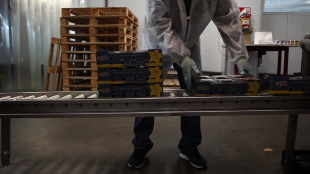 footage of blueberries being packaged at barries del plata zarate buenos aires argentina on wednesday nov 9 2017 photographer erica canepa shots shot... - blueberry stock videos and b-roll footage