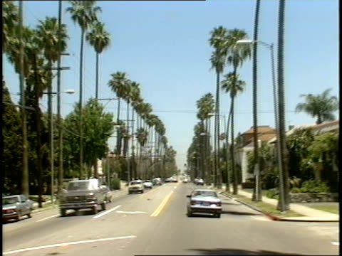 pov footage of driving down palm lined street - palm tree stock videos & royalty-free footage