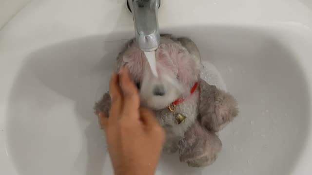 footage of hand cleaning dirty teddy bear - teddy bear stock videos & royalty-free footage