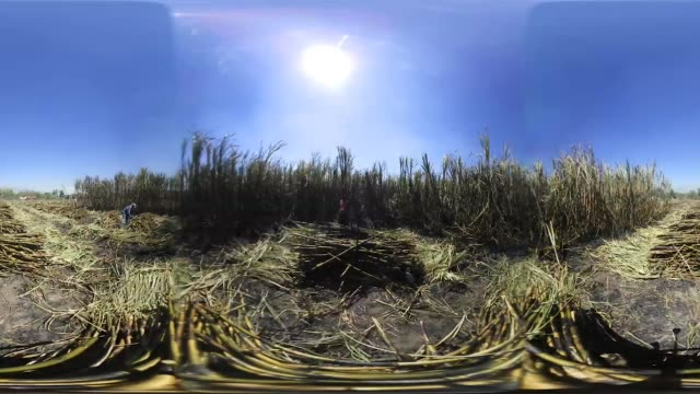 footage of laborers harvesting sugarcane plants in san cayetano nayarit mexico on may 17 2017 - monoscopic image stock videos & royalty-free footage