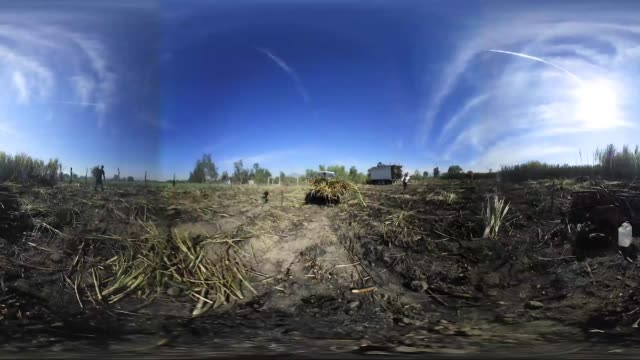 Footage of laborers harvesting sugarcane plants in San Cayetano Nayarit Mexico on May 17 2017