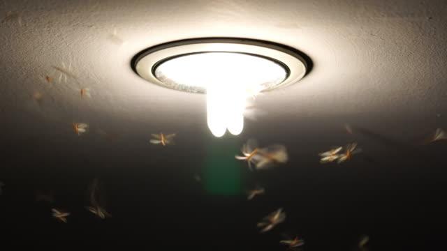 4K film av dagsländor svärma och flyger den ljus, bugg liv koncept