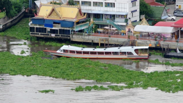 footage of passenger ships with many water hyacinth on the river. - hyacinth stock videos & royalty-free footage