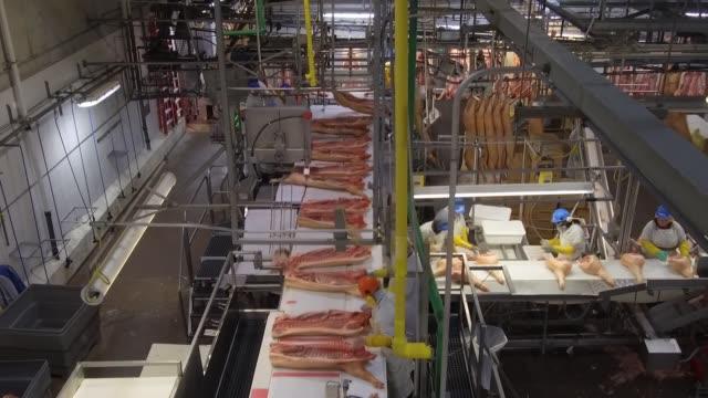footage of pork processing as camera sits overhead at the smithfield plant in milan missouri on april 12 2017 shots overhead shots of workers sorting... - food processing plant stock videos & royalty-free footage