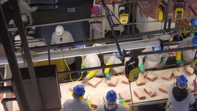 footage of pork processing at the smithfield plant in milan missouri on april 12 2017 shots high angle wide shot of squareshaped pieces of meat being... - food processing plant stock videos & royalty-free footage