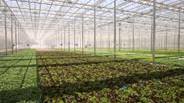 footage of produce growing at a brightfarms, inc. greenhouse in rochelle, illinois, u.s., on friday, may 12, 2017. shots: tilt up of spinach and... - illinois stock videos & royalty-free footage