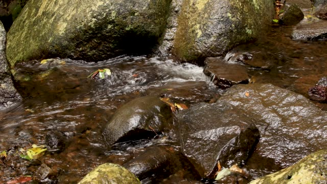 4K Footage Of Rainforest Stream in Lamington National Park Australia