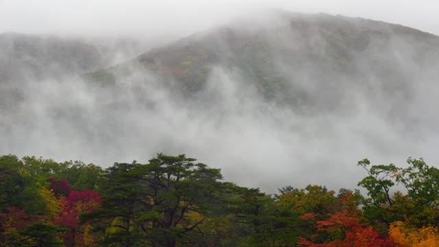 4 K beelden van Raining en mist in multicolor herfst seizoen over de diepe bos op Narugo Gorge, Japan, natuur en reizen concept