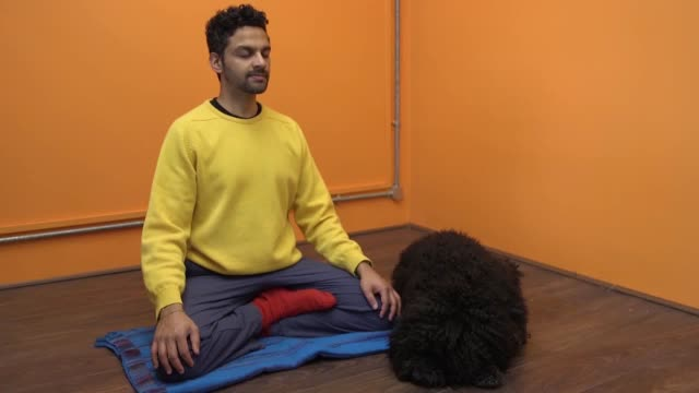 footage of rohan gunatillakefounder of meditation on the go app buddhify and his dog nessie demonstrating 5 steps for meditation with your dog rohan... - crufts hundezuchtschau stock-videos und b-roll-filmmaterial
