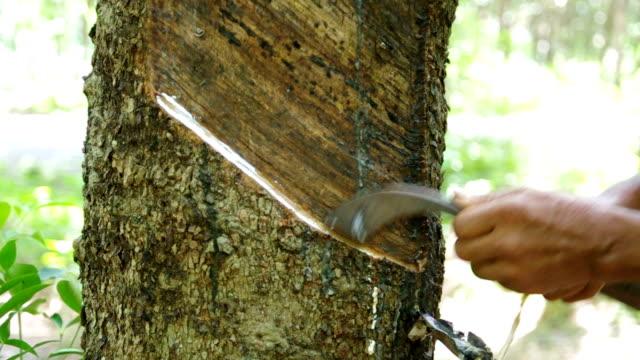 vídeos de stock e filmes b-roll de footage of rubber tapper tapping sap latex - borracha material de escritório