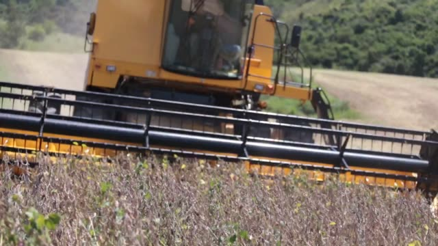 footage of soy bean harvest at the santa cruz farm near atibaia brazil on wednesday mar 29 2017 shots shots of combine harvesting through field as it... - soybean stock videos and b-roll footage
