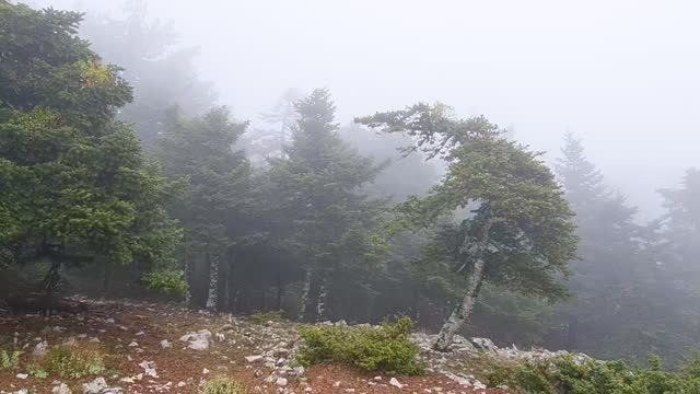 footage of strong winds and fog in a pine tree forest - greece stock videos & royalty-free footage