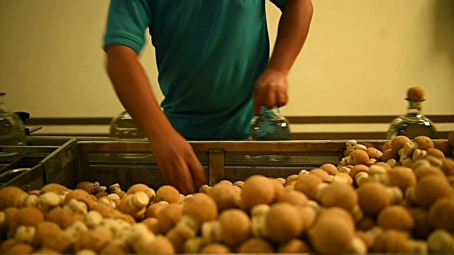 Footage of Tequila Patron bottling and corking process in Atotonilco Mexico on April 5 2017 Shots shot of worker placing corks into bottles / close...