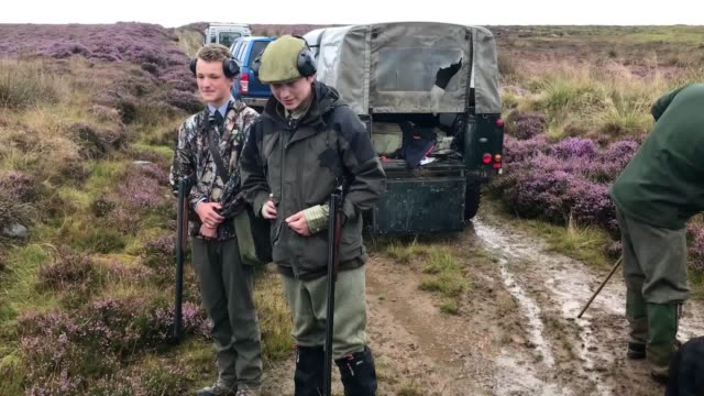footage of the grouse shooting near dunkeld in perthshire as the grouse season opens in scotland - perthshire stock videos & royalty-free footage