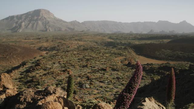 4K Footage of various Tajinaste flowers and volcanic landscape at el Teide National Park, tenerife, Spain