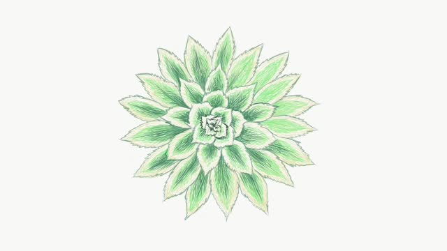 footage sketch of aeonium sunburst plant - succulent stock videos & royalty-free footage