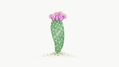 footage sketch of arrojadoa cactus plant - succulent stock videos & royalty-free footage