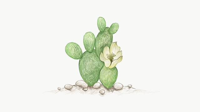 footage sketch of opuntia microdasys cactus - prickly pear cactus stock videos & royalty-free footage