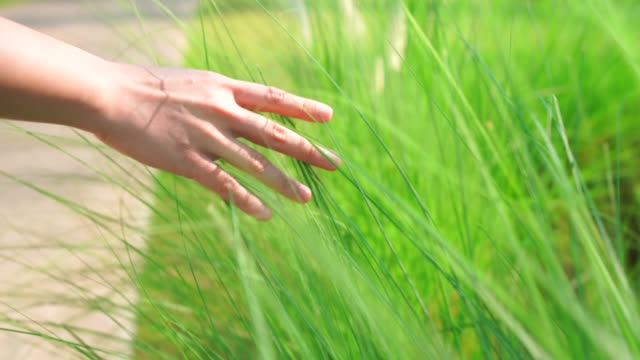 4k footage the hand is touching the grass. - lawn stock videos & royalty-free footage