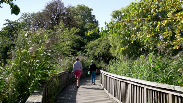 footbridge in london regent's park queen mary's garden section - landscaped stock videos & royalty-free footage