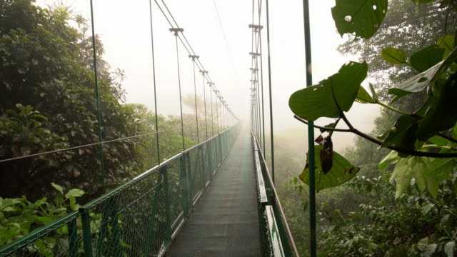 WS Footbridge door een regenwoud in Costa Rica