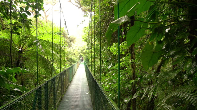 vídeos de stock e filmes b-roll de ds footbridge through a rainforest - costa rica