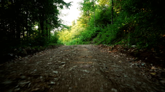 Foothpath in the forest