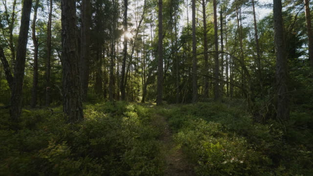 footpath in a lush forest - sweden stock videos & royalty-free footage