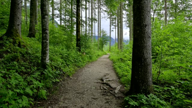 footpath in the forest in summer, lake almsee, almtal, upper austria, austria - upper austria stock videos & royalty-free footage
