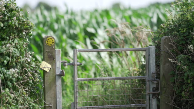 a footpath sign pointing in the direction through a crop of maize - directional sign stock videos & royalty-free footage