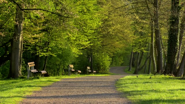footpath with benches in spring - bench stock videos & royalty-free footage