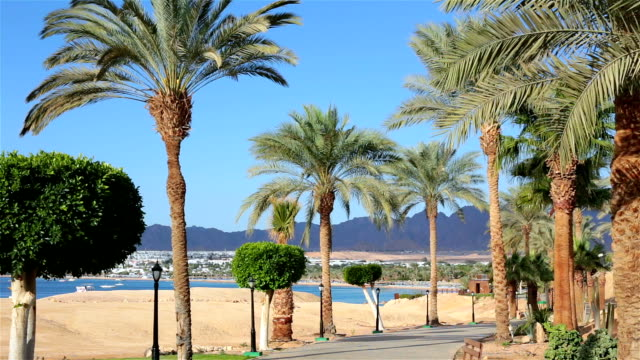 footpath with palm trees near the red sea. egypt. - palm leaf stock videos & royalty-free footage