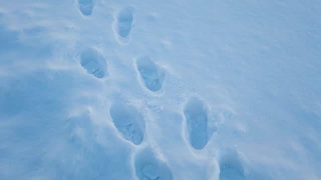 vídeos de stock e filmes b-roll de 4k footprint walking step on snow - pegada