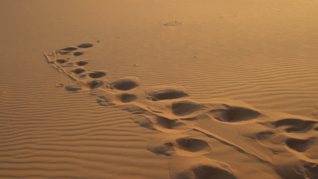 footprints in the sands of the dunes of erg chebbi, saharan morocco - footprint stock videos & royalty-free footage