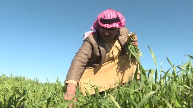 for decades his land was his life now like other sunni arab farmers in iraq's diverse north mahdi abu enad is estranged from his fields out of fear... - sinjar mountains stock videos & royalty-free footage