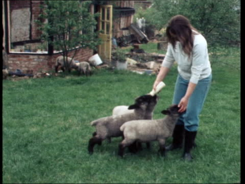 for food: lambs, goats, rabbits & ducks: intvw mrs jackson nat - young animal stock videos & royalty-free footage