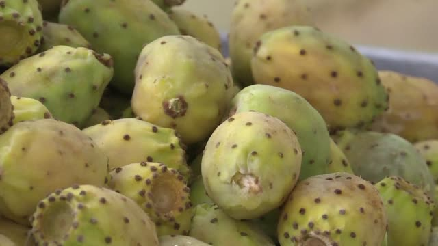 for generations algerians like the gueldasmi family have barely eked out a living growing prickly pear fruits but thanks to the cactus's new found... - dornig stock-videos und b-roll-filmmaterial